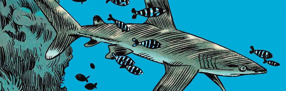 BDTK 3 : Les Requins
